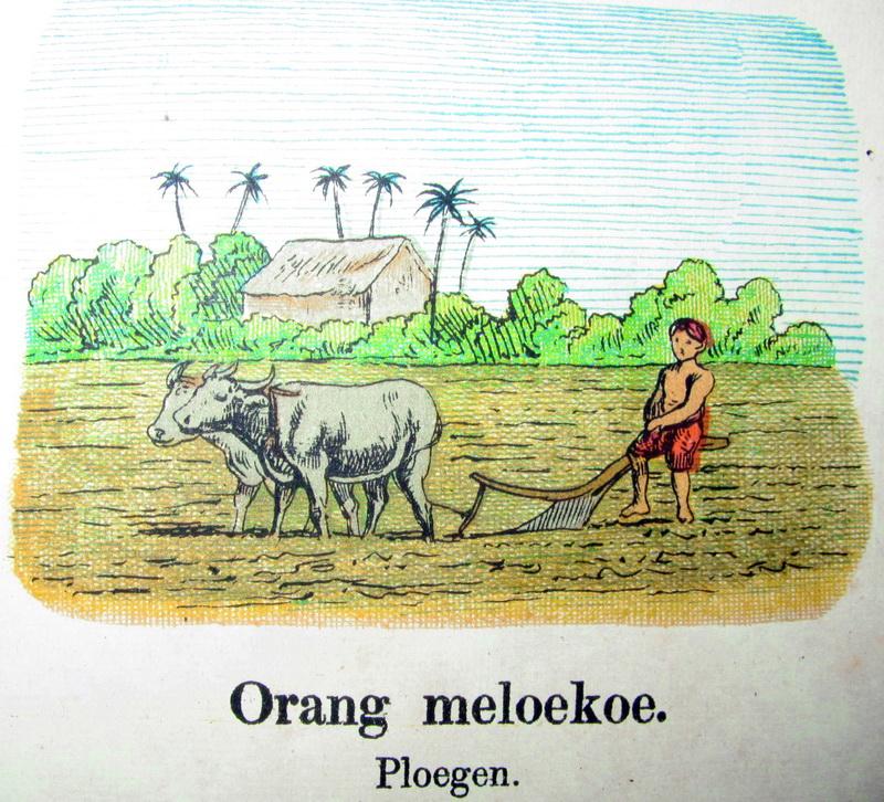 List Gambar Mewarnai Petani Membajak Sawah Pict Pictures Koleksi Langka